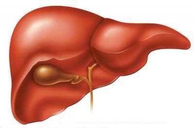 Що робити, якщо сильно болить печінка після алкоголю?