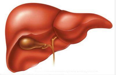 Що означає неоднорідна ехоструктури печінки?