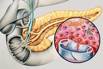 Підшлункова залоза