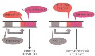 Схема індукції бактеріального ферменту