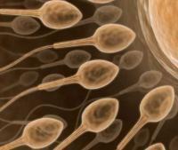 Як збільшити кількість сперми