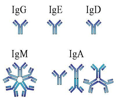 Які аналізи здають при гепатиті з і чому вони хибнопозитивні?