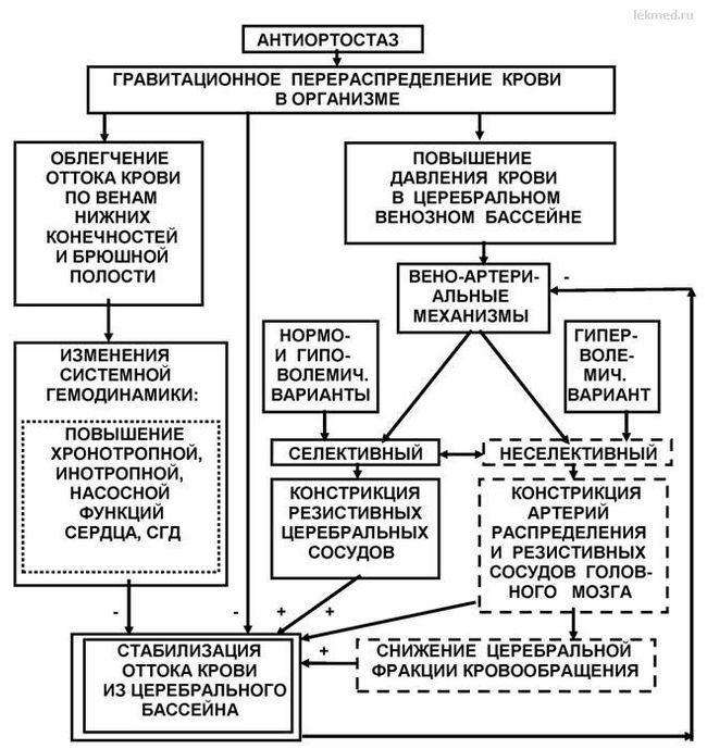 Механізми регуляції відтоку крові з церебрального басейну в антиортостаз