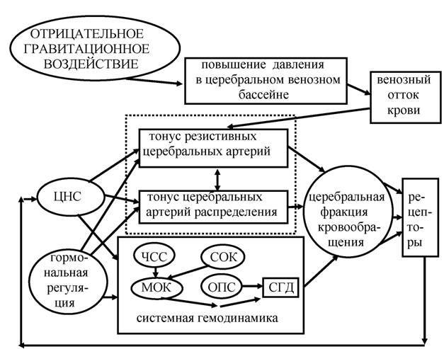 система оптимізації мозкового кровотоку у здорових людей в умовах антиортостаз