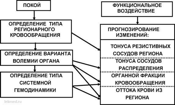 етапи типологічного аналізу регіонарного кровообігу людини