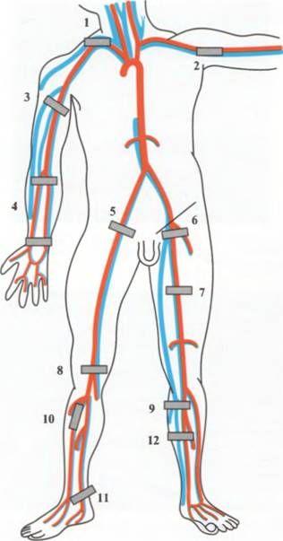 Візуалізація судин по анатомічним проекція