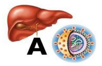 Протягом інкубаційного періоду при гепатиті а